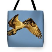 Golden Osprey In Dawn's Early Light Tote Bag