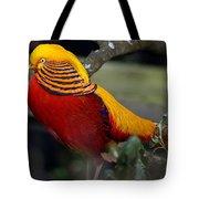 Golden Pheasant Posing Tote Bag