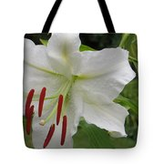 Golden Rayed  Lily Tote Bag
