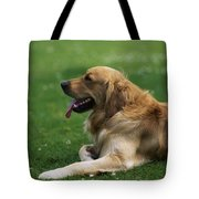 Golden Retriever Dog Laying In The Grass Tote Bag