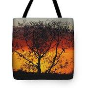 Golden Sunset Over Circle B Bar Sandstone Tote Bag