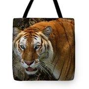Golden Tabby Bengal Tiger Tote Bag