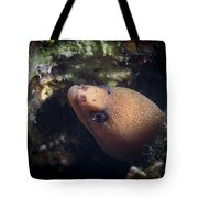 Golden Tail Eel Tote Bag