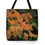 Golden Tree Moment Tote Bag