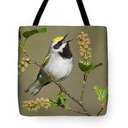 Golden-winged Warbler Vermivora Tote Bag