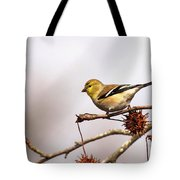 Goldfinch In Sweetgum Tote Bag