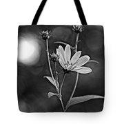 Good Morning Bw Tote Bag