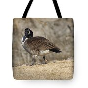 Goose With Head Cocked  Tote Bag