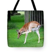 Got An Itch Tote Bag by Isabella F Abbie Shores FRSA