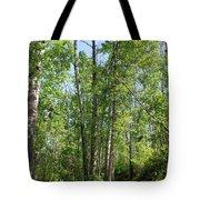 Graceful Aspen Poplars Tote Bag