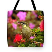 Graceful Honeyeater Tote Bag