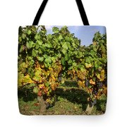 Grapes Growing On Vine Tote Bag