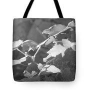 Grapevine In Morning Light Tote Bag