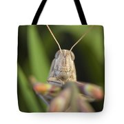 Gray Bird Grasshopper Schistocerca Tote Bag
