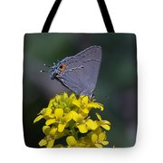 Gray Hairstreak Butterfly Din044 Tote Bag