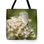 Gray Hairstreak Butterfly On Milkweed Wildflowers Tote Bag