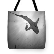 Gray Reef Shark, Kimbe Bay, Papua New Tote Bag