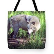 Gray Wolf Watching Tote Bag