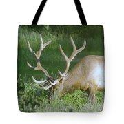 Grazing Bull Elk  Tote Bag