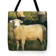 Grazing Sheep. Tote Bag