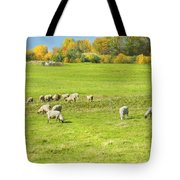 Grazing Sheep On Farm In Autumn Maine Tote Bag