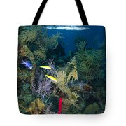 Great Barracuda, Belize Tote Bag