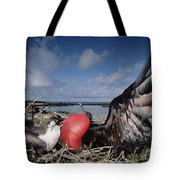 Great Frigatebirds Courting Tote Bag