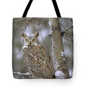 Great Horned Owl In Its Pale Form Tote Bag by Tim Fitzharris
