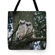 Great Horned Owls Young Tote Bag