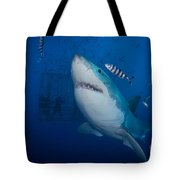 Great White Shark And Pilot Fish Tote Bag
