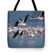 Greater Flamingos In Flight Over Lake Tote Bag