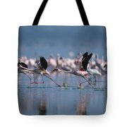 Greater Flamingos Run Through Shallow Tote Bag