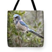Greedy Florida Scrubjay Tote Bag
