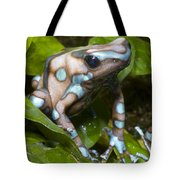Green And Black Poison Frog Tote Bag