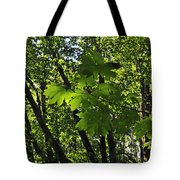 Green Canopy Tote Bag