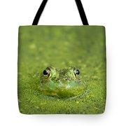 Green Frog Eyes Tote Bag