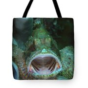 Green Grouper With Open Mouth, North Tote Bag by Mathieu Meur