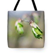 Green Leaf In Spring Tote Bag