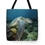 Green Sea Turtle Chelonia Mydas Tote Bag