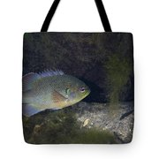 Green Sunfish Swimming Along The Rocky Tote Bag