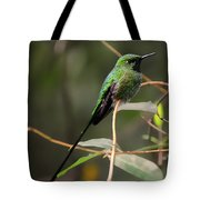 Green Tailed Trainbearer Hummingbird Stylized Tote Bag
