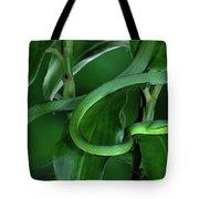 Green Vine Snake Oxybelis Fulgidus Tote Bag