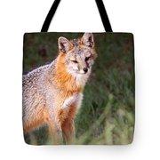Grey Fox - Vantage Point Tote Bag