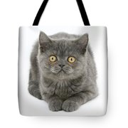 Grey Kitten Tote Bag