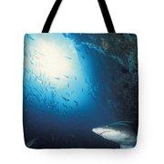 Grey Nurse Shark Turning Away From Reef Tote Bag