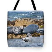 Grey Seals Tote Bag