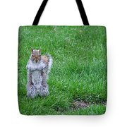 Grey Squirrel In The Rain II Tote Bag