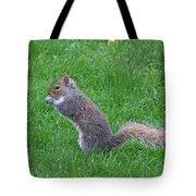 Grey Squirrel In The Rain Tote Bag