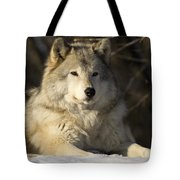 Grey Wolf Canis Lupus In Ecomuseum Zoo Tote Bag