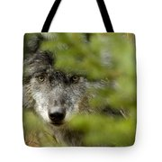 Grey Wolf, Outside Golden, British Tote Bag